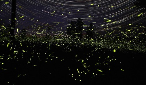 lightning_bugs_star_trails